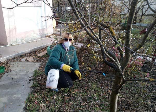 Обработка сада железным купоросом осенью и весной: как разводить (пропорции) и применять