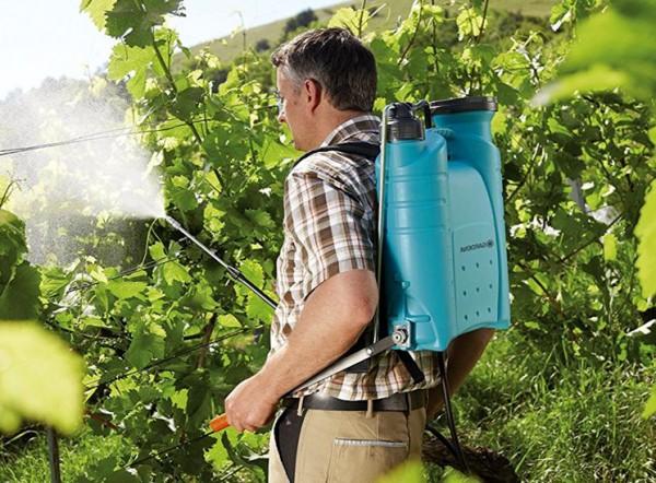 Обработка винограда весной: когда и чем опрыскивать от болезней и вредителей