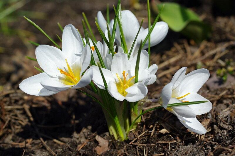 Лунный календарь садоводов огородников на апрель 2019 года