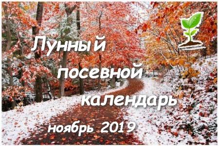 Лунный календарь садоводов и огородников на ноябрь 2019 года