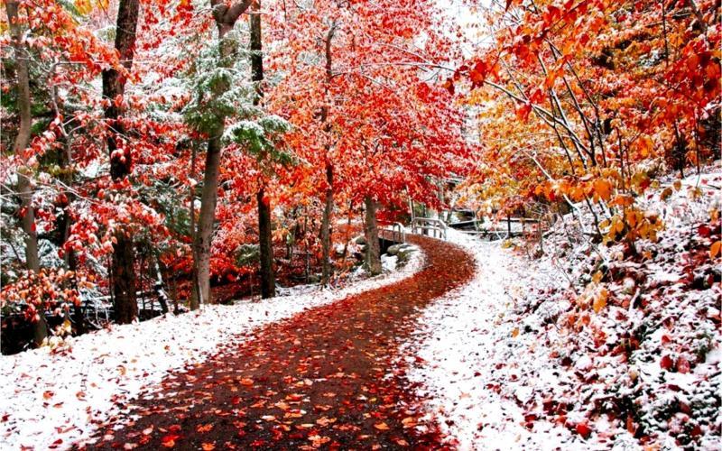 Месяц ноябрь