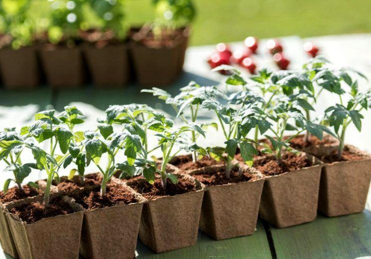 Лунный посевной календарь садоводов и огородников на 2020 год
