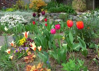 Лунный посевной календарь садоводов, огородников, цветоводов на февраль 2020 года